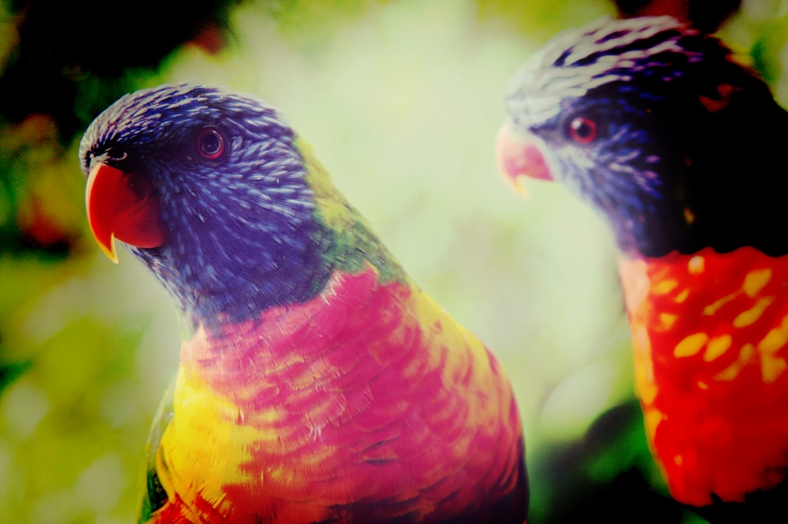 parrotpair_img_0327